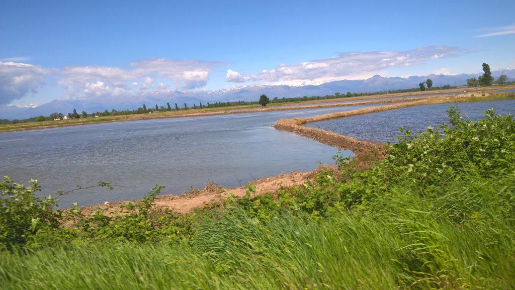 Die Reisfelder Norditaliens: die meisten glauben, dass unser Reis aus Asien kommt. Nein, sondern aus der Gegend um Novara