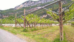 Zwischen Gardasee und Etschtalradweg kurz vor Rovereto